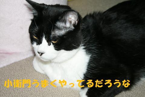 061_convert_20100719205345.jpg
