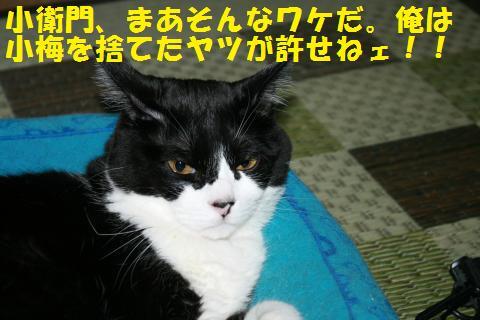 061_convert_20100814165451.jpg