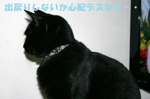061_convert_20111201204830.jpg