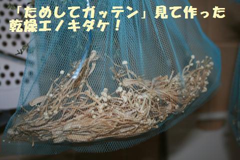 063_convert_20111117194947.jpg