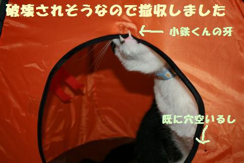 064_convert_20110802181319.jpg