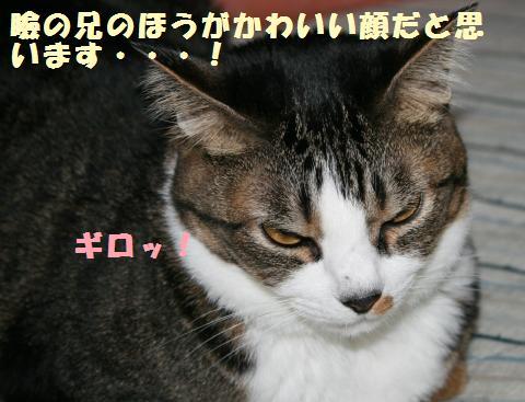 064_convert_20110910165346.jpg