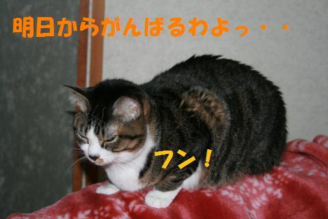 067_convert_20100214211348.jpg