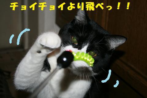 068_convert_20110221230000.jpg