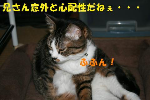 079_convert_20100719205639.jpg