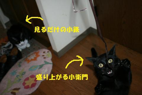 084_convert_20100911233844.jpg