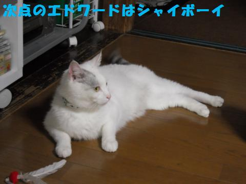 088_convert_20110610145405.jpg