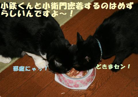 088_convert_20110919215425.jpg