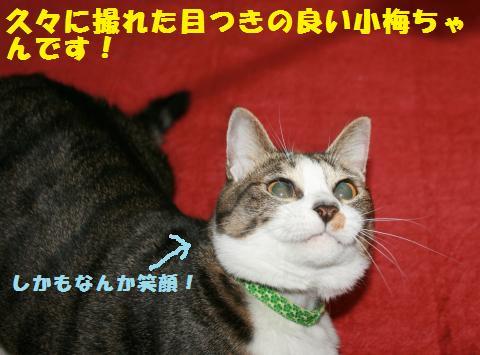090_convert_20110220231248.jpg