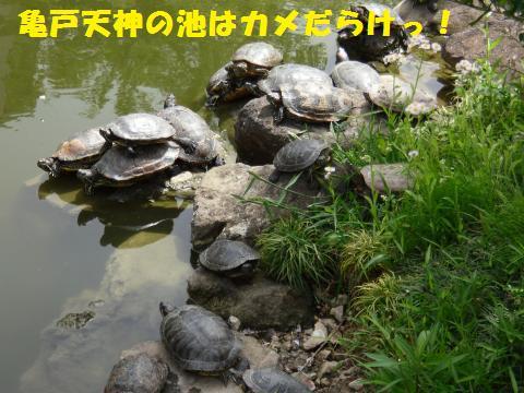 096_convert_20110502180732.jpg