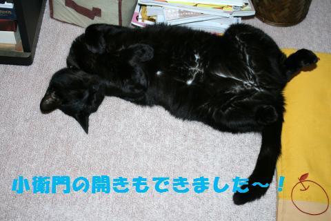 097_convert_20110619224049.jpg