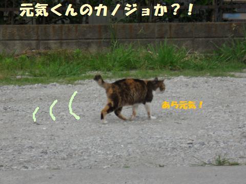 116_convert_20110611214540.jpg