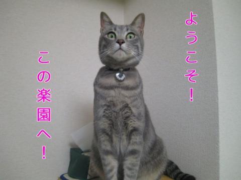 繧医≧縺薙◎・・シ胆convert_20110523175918