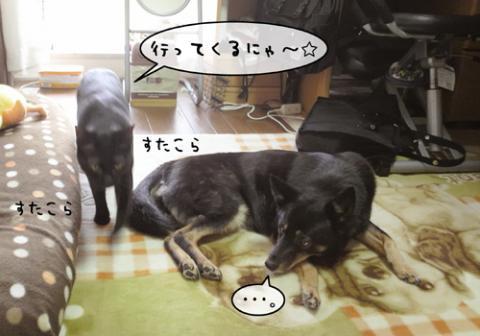 ・偵??陦後▲縺ヲ縺上k縺ォ繧・ス枩convert_20110624201921