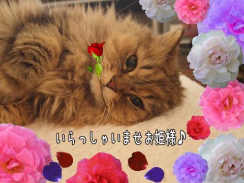 A_convert_20110523174343.jpg