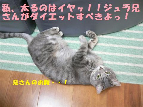 P1000830_convert_20110115012224.jpg