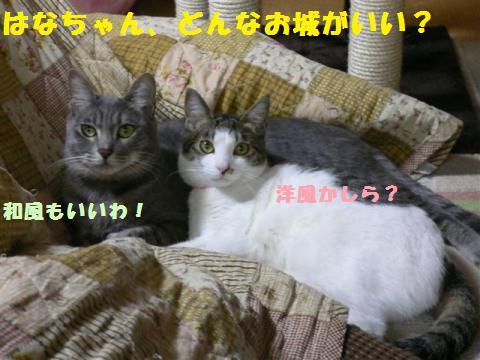 P1010055_convert_20110512230041.jpg