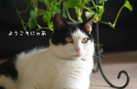 hwnjl_convert_20110523174519.jpg
