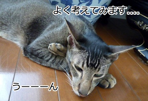 konan_2_1.jpg