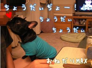 2009080315.jpg