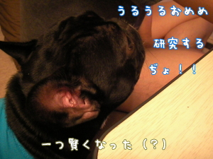 2009080316.jpg