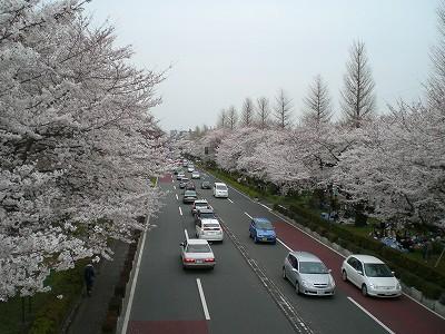 daigakudouri.jpg