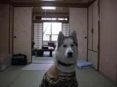 野上屋 004