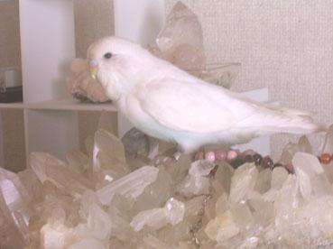 水晶とシルフィー