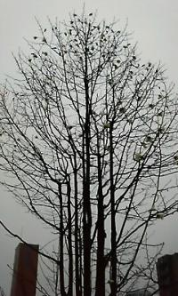 帯広駅 木