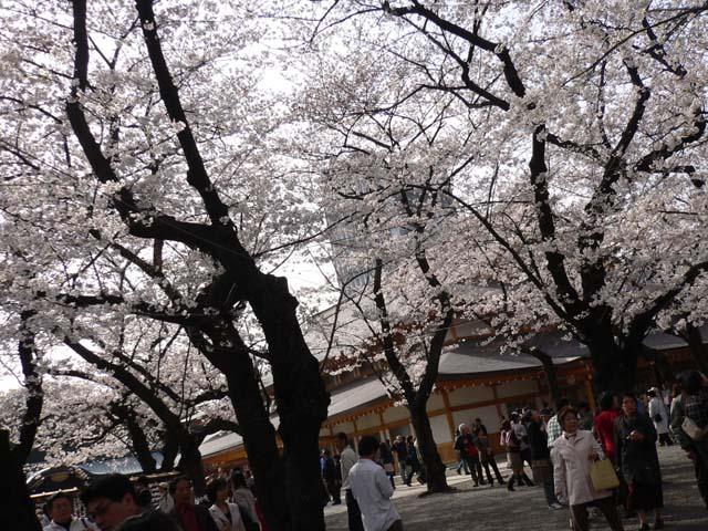 yasukunisa