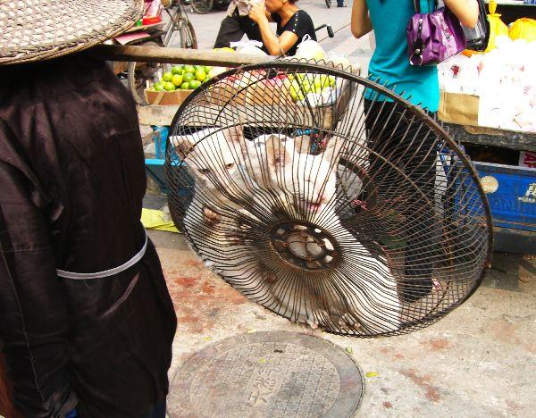 海南島6日目三亜の市場ねこ