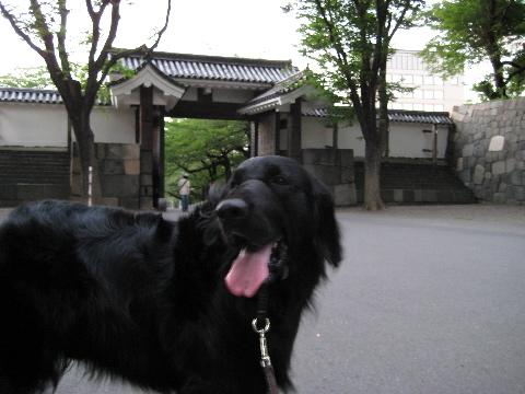 deguchi8-14.jpg