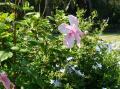 南国な庭園に咲いてました