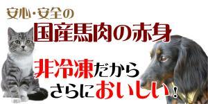 baniku_t1.jpg