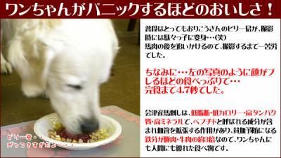 baniku_t6.jpg