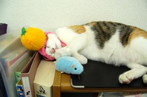 みかんの帽子にもなれ爆睡中のチビ!