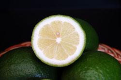 グリーンレモン 輪切り