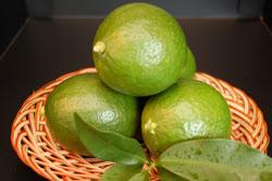 グリーンレモン 三重県産