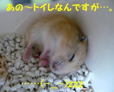 日記8・17ハムちゃん寝る
