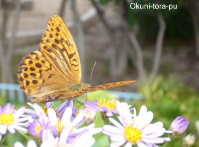 日記9・27蝶4