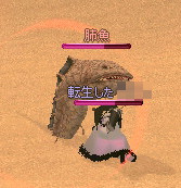 砂漠の魚6