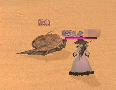 砂漠の魚7