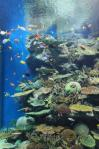 島根県立しまね海洋館アクアスAQUAS