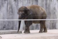 福山市立動物園1