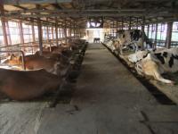 MISAO牧場