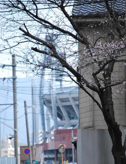 桜越しの球場