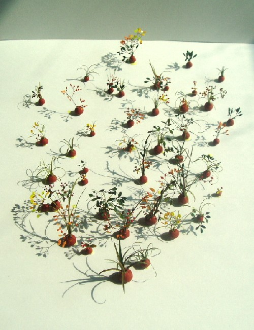 bonsai40.jpg