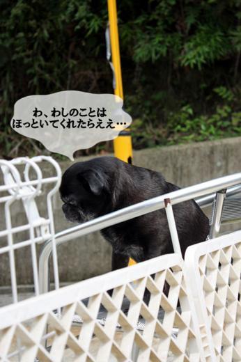まれすけ~!!