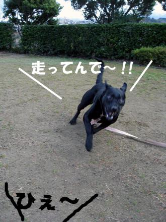hatuhasiri4.jpg