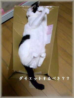 悩む猫・・・